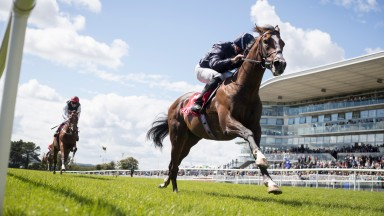 Three-year-old colt Amedeo Modigliani winning at Galway last year