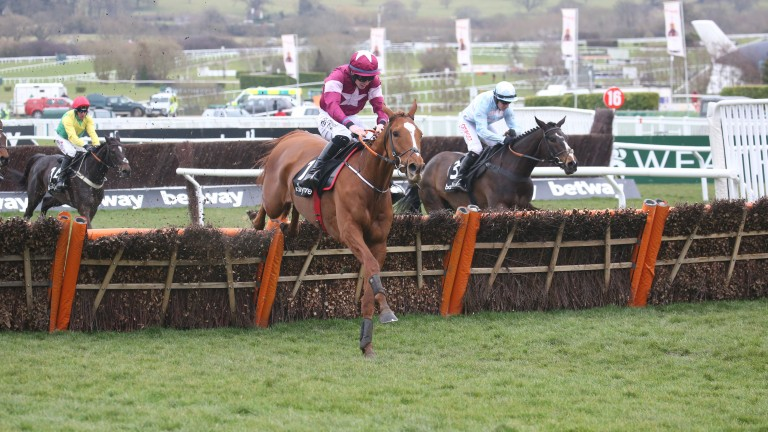 Samcro leads Black Op over the final flight in the Ballymore Novices' Hurdle at Cheltenham