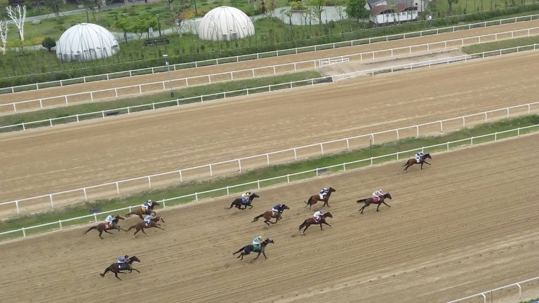 The Korean Derby was held at Seoul on Sunday