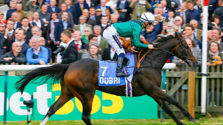 Limato: returns to a mile in Saturday's Group 1 Al Shaqab Lockinge Stakes