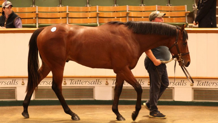 The Scat Daddy colt out of Madera Dancer topped the Tattersalls Craven Breeze-Up Sale when selling to Stephen Hillen for 900,000gns