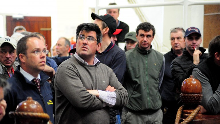 Peter Nolan (grey jumper) sold the sale-topping son of Fame And Glory for €65,000