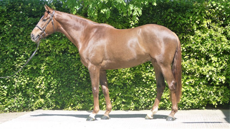 The son of Getaway out of a half-sister to Fiveforthree to be offered by Ballyreddin Stud at the Goffs UK Spring Store Sale