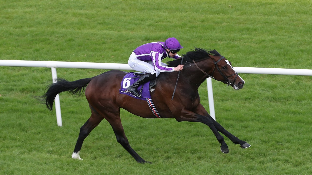 Image result for southern France horse