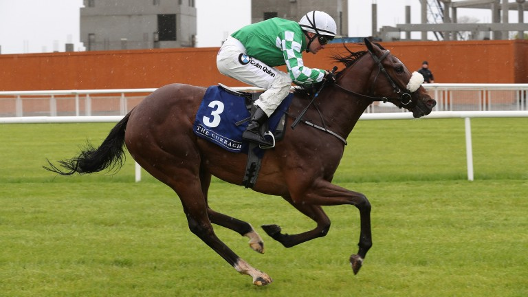 Dandys Ocean has flown the flag for the initial Irish barrier trials