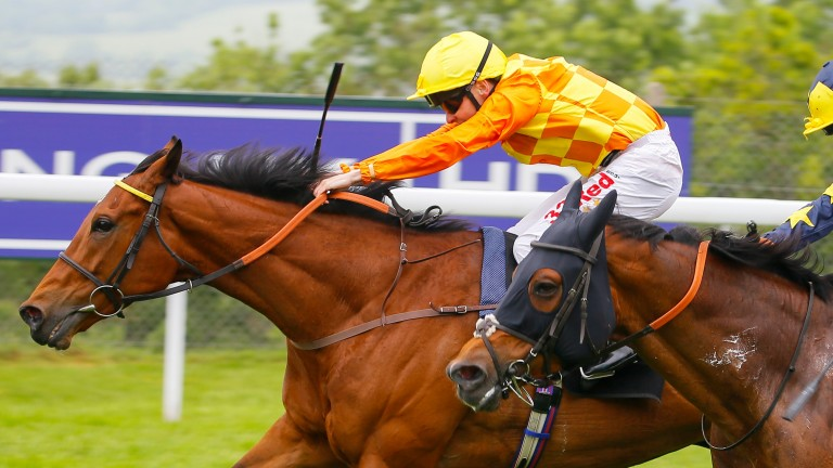 Second Step: trainer Roger Charlton is confident of a good show