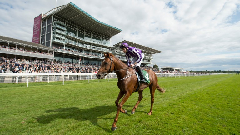 Spain would be Aidan O'Brien's superstar Australia