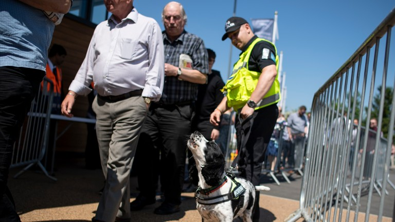 A sniffer dog in action at the entrance to Newbury