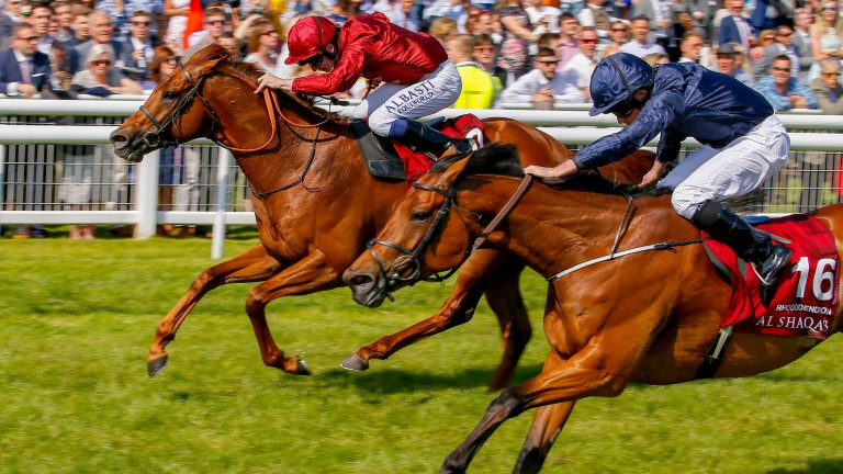 Rhododendron pips Lightning Spear in the Lockinge