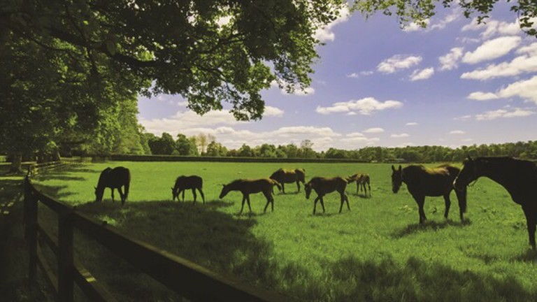 The 256-acre Grangecon Stud is situated in County Wicklow