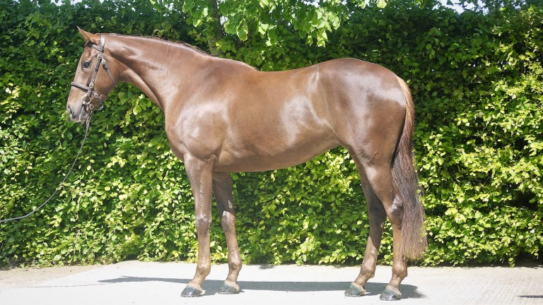The Lucarno half-sister to Royal Shakespeare who will be offered as Lot 82 at Goffs UK