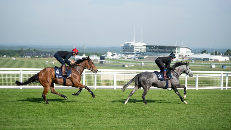 Perfect Clarity (Adam Kirby) follows Luire down the hill to Tattenham Corner at Breakfast With The Stars