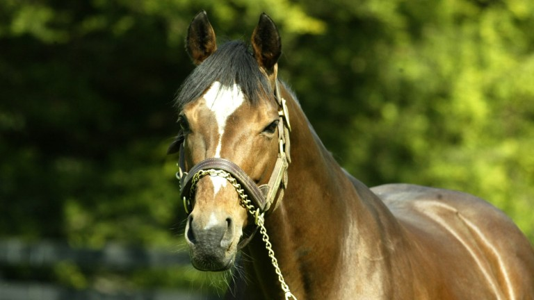Galileo: six yearling fillies by the nine-time champion sire will be offered at the Tattersalls July Sale