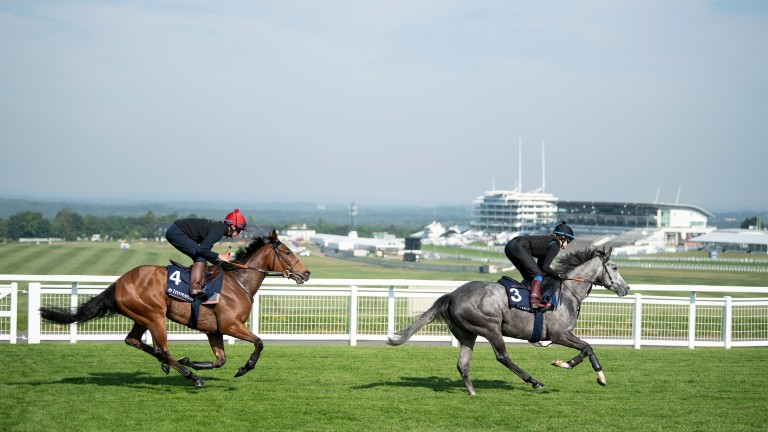 Ready for Epsom: Oaks hopeful Perfect Clarity follows Luire down the hill
