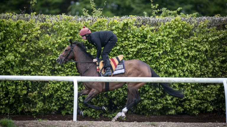 Happily, pictured on the Ballydoyle gallops, misses the Oaks for the Irish Guineas