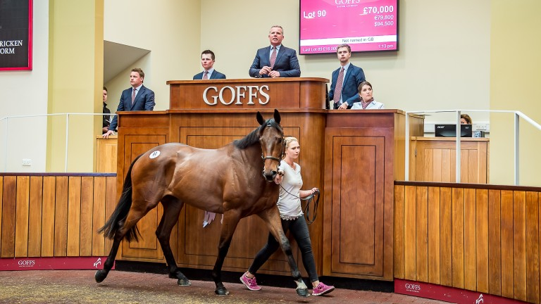 The Al Namix gelding bought by Tom Malone and Paul Nicholls for £70,000 at the Goffs UK Spring Store Sale