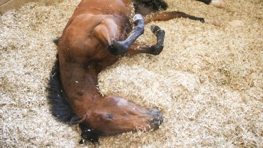 Battaash takes his usual post-exercise roll