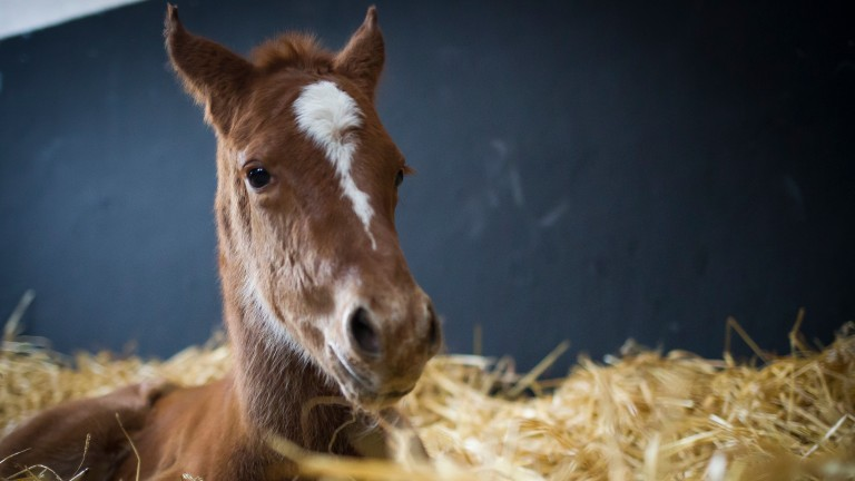 Almost 15,000 foals were born across Britain and Ireland in 2017