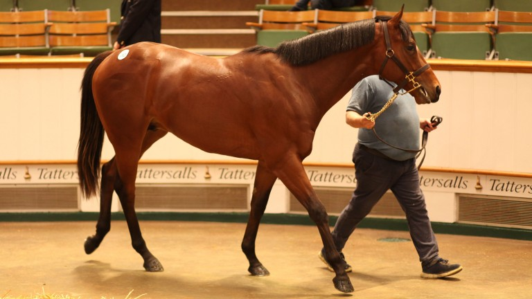 Legends Of War in the Tattersalls ring before bringing 900,000gns