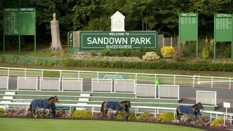 Craig Williamson has responsibility for Sandown and Epsom