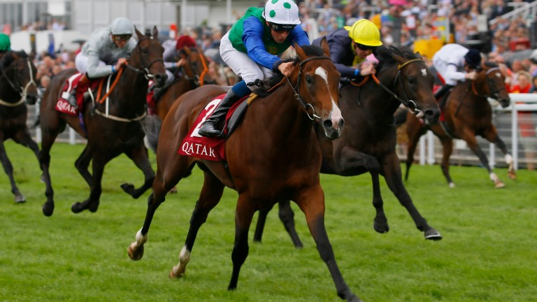 Barraquero winning the Group 2 Richmond Stakes at Goodwood on his most recent start in August last year