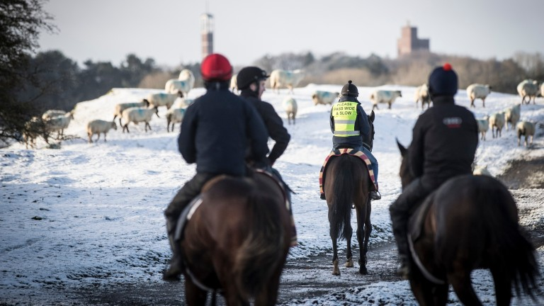 Michael O'Callaghan's fourth lot head home from the Stepaside gallop on a snowy morning
