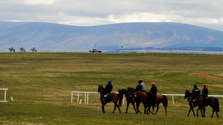 Horses make their way to the gallops on the Curragh
