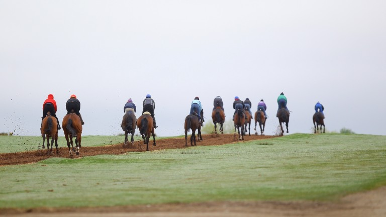 John Oxx's string canter on the Foxcover gallop