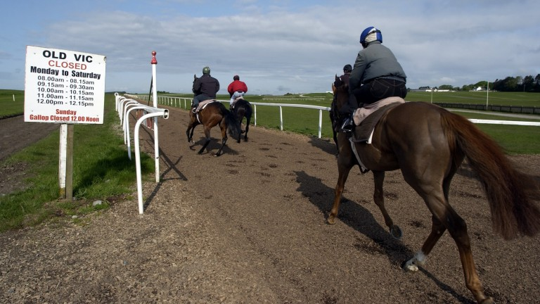 Horses from Dermot Weld's yard start their canter up the Old Vic all-weather gallop