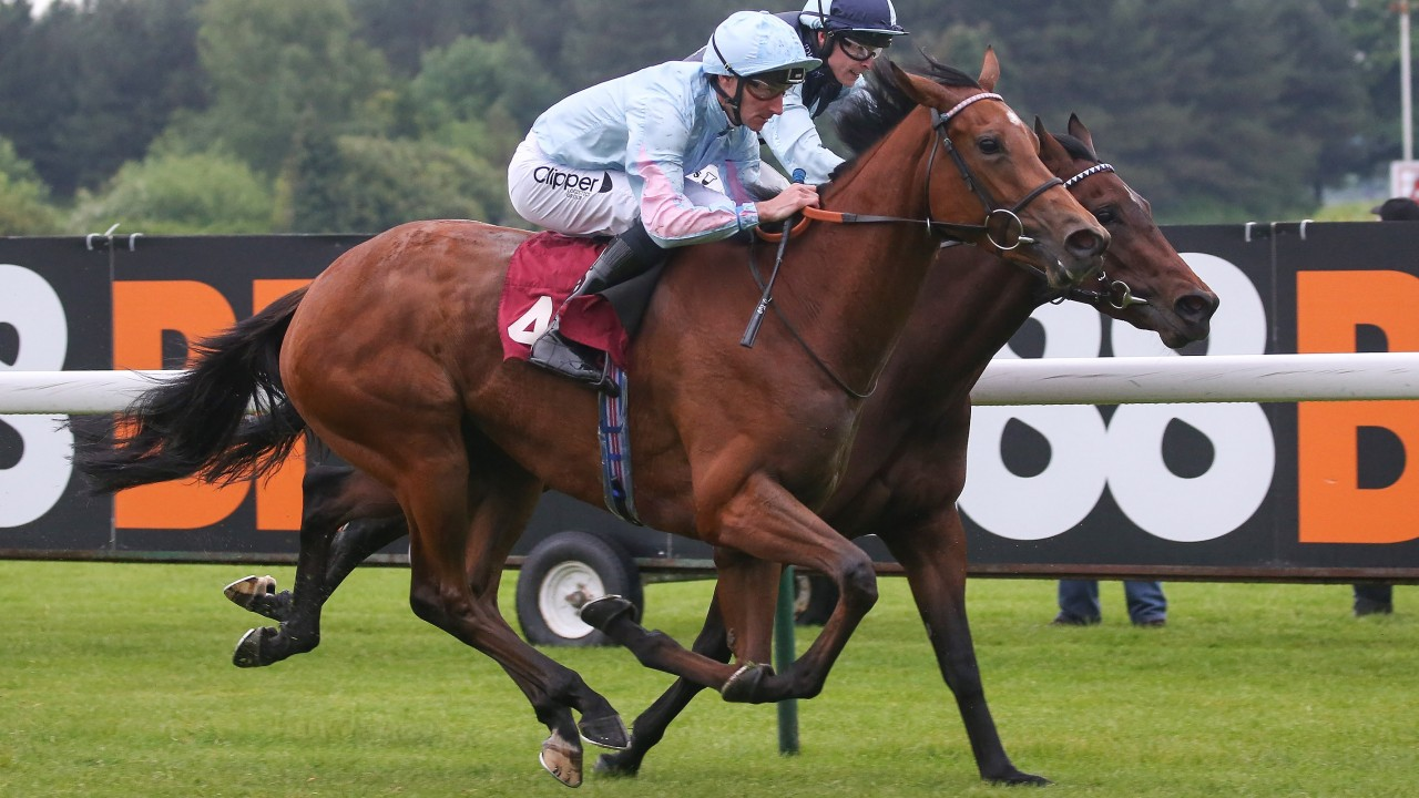 Persuasive dam on the mark with another winner and in foal