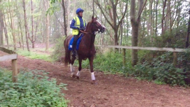 Hawkbill makes his way back to Moulton Paddocks
