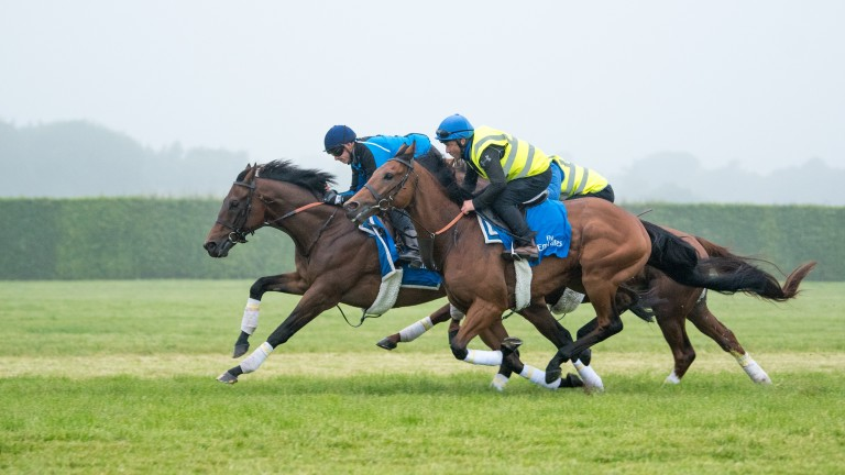 Rare Rhythm and James Doyle show the way on the long gallop