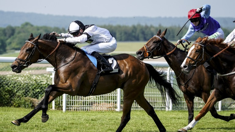 Platitude in winning form at Goodwood earlier in the year