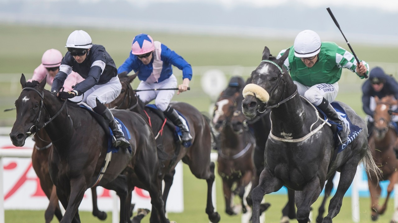 44d0a98c02f Platinum Warrior (right) sees off Latrobe (left) in the Airlie Stud  Gallinule Stakes last month. The pair are set to lock horns again this  Saturday at the ...