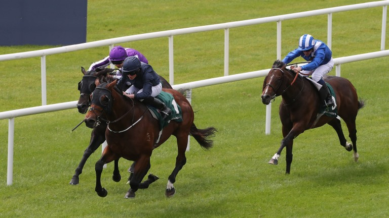 Merchant Navy: likely to serve it up to Harry Angel in the Diamond Jubilee Stakes