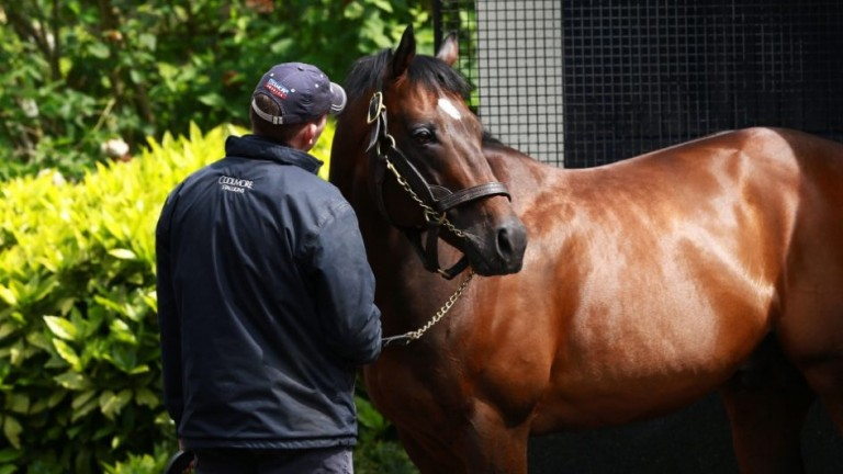 Holy Roman Emperor: Coolmore's mid-market option is the sire of Romanised