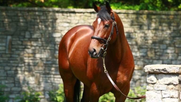 Declaration Of War: stands at Coolmore's Kentucky arm of Ashford Stud
