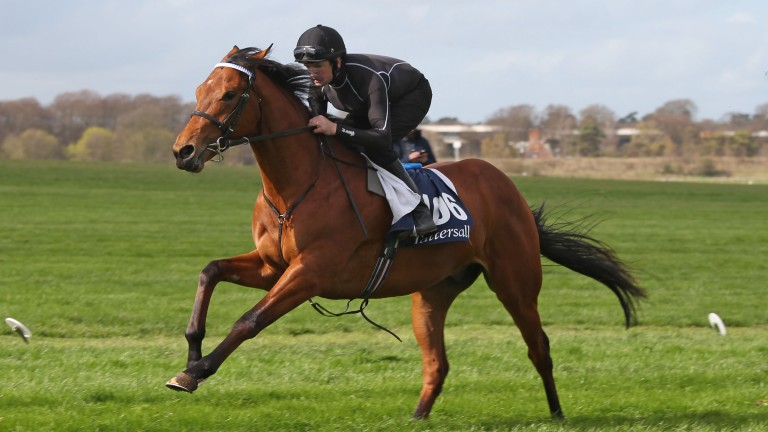 A lot breezes up the Rowley Mile
