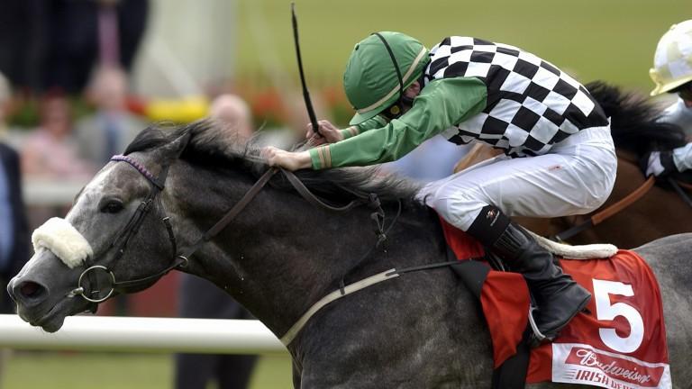 Grey Swallow winning the Irish Derby