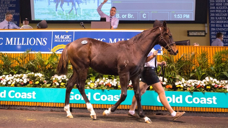 A quality catalogue of 219 lots has been released for the Magic Millions 2YOs in Training Sale on October 9