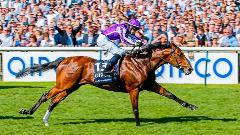 Saxon Warrior: will drop to a mile and a quarter in the Juddmonte International