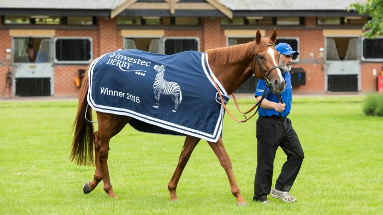 Derby hero Masar is led out to meet the press at Moulton Paddocks