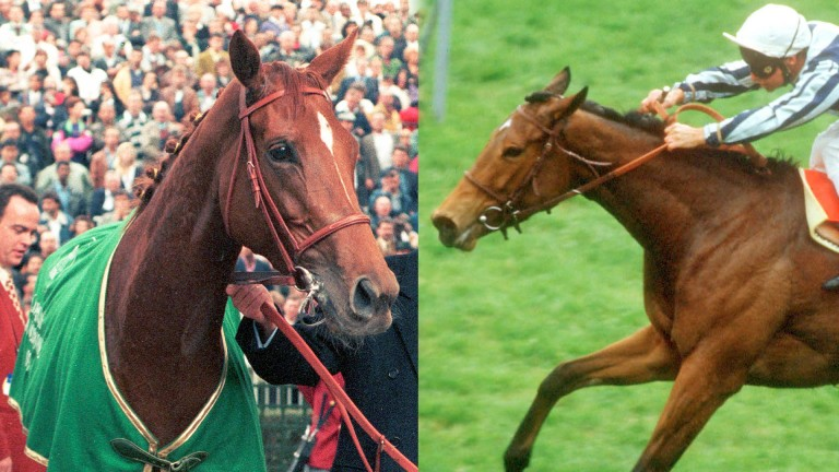 Dynamic duo: Urban Sea (left) and Miesque have both been in the news of late