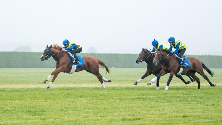 Brett Doyle partners Epsom Derby hero Masar on the gallops