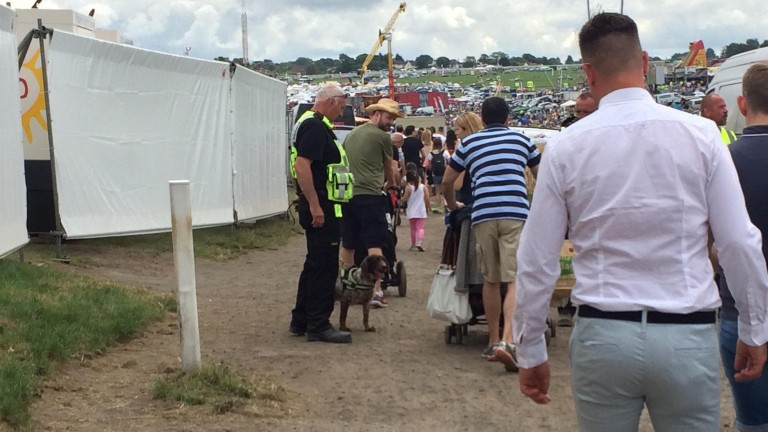Sniffer dogs have been a regular presence at Saturday meetings this year