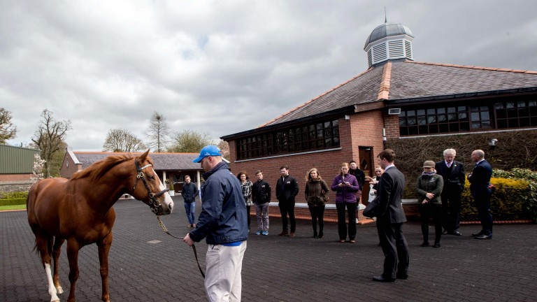 Kildangan Stud: the new intake of Flying Start students begin the course there in August