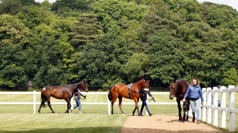 The scene at the Tattersalls Ireland Ascot June Sale