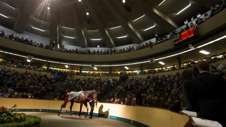 Chicquita in the Goffs ring before selling to Ross and Peter Doyle for €6 million