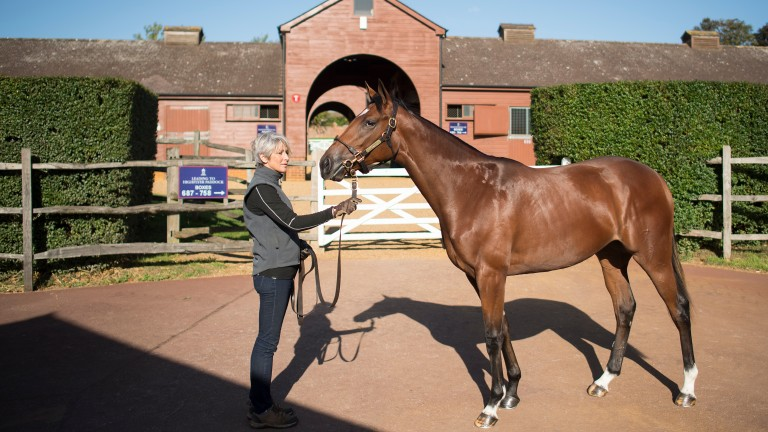 Gloam: the 4,000,000gns Galileo filly strikes a pose at Tattersalls before going through the ring