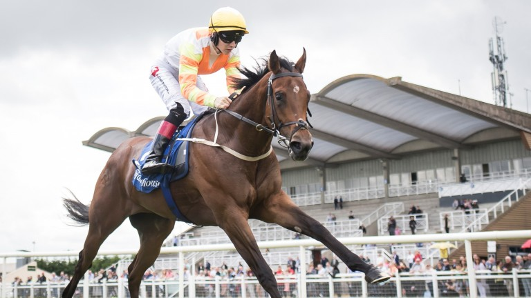 Blue Uluru can make it two wins in a row Friday evening at Curragh